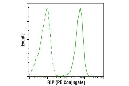 Flow cytometric analysis of MCF7 cells using RIP (D94C12) XP<sup>®</sup> Rabbit mAb (PE Conjugate) (solid line) compared to concentration-matched Rabbit (DA1E) mAb IgG XP<sup>®</sup> Isotype Control (PE Conjugate) #5742 (dashed line).