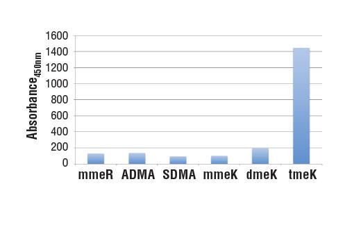 Monoclonal Antibody - Tri-Methyl Lysine Motif [tme-K] (D1L1X) Rabbit mAb - 100 µl #14680 - #14680