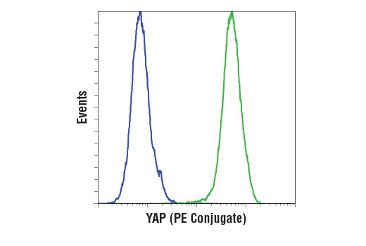 Flow cytometric analysis of RL-7 cells (blue) and A-204 cells (green) using YAP (D8H1X) XP<sup>®</sup> Rabbit mAb (PE Conjugate).