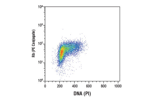 Flow cytometric analysis of Jurkat cells using Rb (4H1) Mouse mAb (PE Conjugate) and DRAQ5<sup>®</sup> #4084 to measure DNA content.