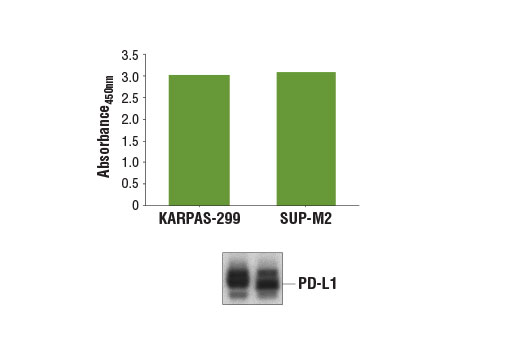 ELISA Kit Negative Regulation of interleukin-10 Production