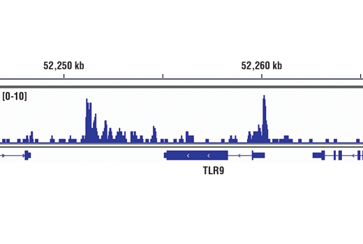 Chromatin immunoprecipitations were performed with cross-linked chromatin from Jurkat cells and Ikaros (D6N9Y) Rabbit mAb, using SimpleChIP<sup>®</sup> Enzymatic Chromatin IP Kit (Magnetic Beads) #9005. DNA Libraries were prepared using SimpleChIP<sup>®</sup> ChIP-seq DNA Library Prep Kit for Illumina<sup>®</sup> #56795. The figure shows binding across TLR9 gene. For additional ChIP-seq tracks, please download the product data sheet.
