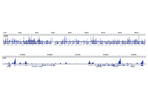 Chromatin Immunoprecipitation Image 2: BCL6 (D4I2V) XP® Rabbit mAb