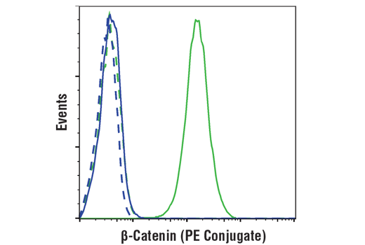 Flow cytometric analysis of NCI-H28 cells (blue) and Hela cells (green) using β-Catenin (D10A8) XP® Rabbit mAb (PE Conjugate) (solid lines) or a concentration-matched Rabbit (DA1E) mAb IgG XP<sup>®</sup> Isotype Control (PE Conjugate) #5742 (dashed lines).