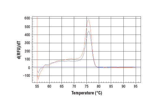 PCR product melting curves were obtained for real-time PCR reactions performed using SimpleChIP<sup>®</sup> Human c-Myc Intron 1 Primers. Data is shown for both duplicate PCR reactions using 20 ng of total DNA. The melt curve consists of 80 melt cycles, starting at 55°C with increments of 0.5°C per cycle. Each peak is formed from the degradation of a single PCR product.
