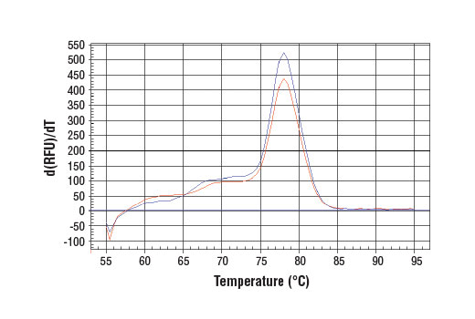 PCR product melting curves were obtained for real-time PCR reactions performed using SimpleChIP<sup>®</sup> Human HoxA9 Promoter Primers. Data is shown for both duplicate PCR reactions using 20 ng of total DNA. The melt curve consists of 80 melt cycles, starting at 55°C with increments of 0.5°C per cycle. Each peak is formed from the degradation of a single PCR product.