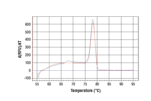 PCR product melting curves were obtained for real-time PCR reactions performed using SimpleChIP<sup>®</sup> Human CTGF Upstream Primers. Data is shown for both duplicate PCR reactions using 20 ng of total DNA. The melt curve consists of 80 melt cycles, starting at 55°C with increments of 0.5°C per cycle. Each peak is formed from the degradation of a single PCR product.