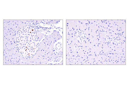 Immunohistochemistry Image 1: Cre Recombinase (D7L7L) XP® Rabbit mAb