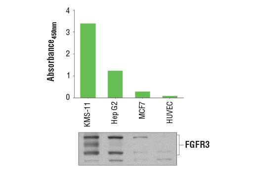 Image 1: PathScan® Total FGF Receptor 3 Sandwich ELISA Kit