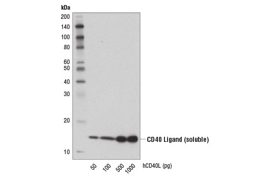 Image 55: Human T Cell Co-inhibitory and Co-stimulatory Receptor IHC Antibody Sampler Kit