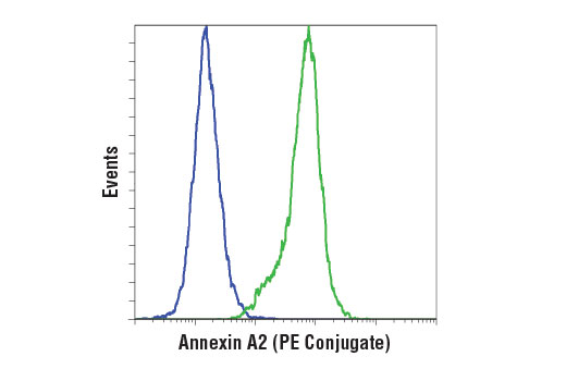 Flow cytometric analysis of HL-60 cells (blue) and K-562 cells (green) using Annexin A2 (D11G2) Rabbit mAb (PE Conjugate).