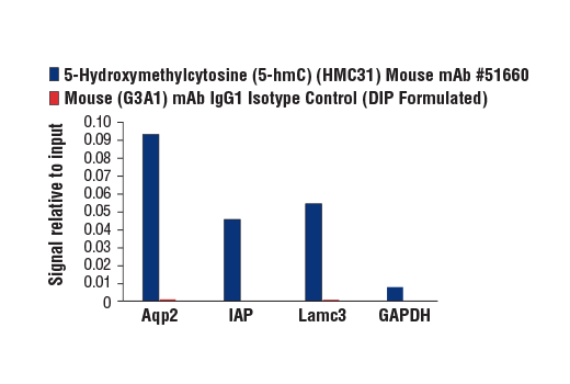 Image 1: 5-Hydroxymethylcytosine (5-hmC) (HMC31) Mouse mAb