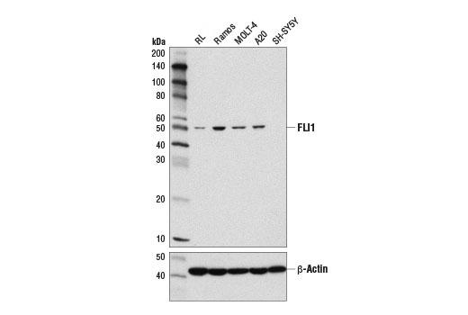 Monoclonal Antibody Hemostasis - count 2