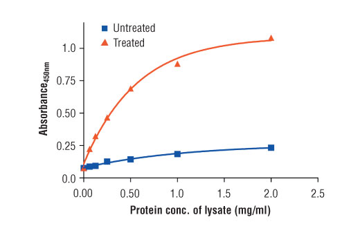 Figure 2: The relationship between protein concentration of lysates from untreated and hFGF-treated Hep G2 cells and the absorbance at 450 nm as detected by the PathScan<sup>®</sup> Phospho-FGF Receptor 4 (panTyr) Sandwich ELISA Kit #69193 is shown. Starved Hep G2 cells (85% confluence) were treated with Human FGF acidic (hFGF acidic) #5234 (100 ng/ml, 2-5 min, 37°C) and then lysed.