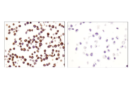 Image 46: Human Immune Cell Phenotyping IHC Antibody Sampler Kit
