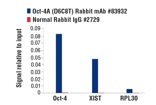 Chromatin immunoprecipitations were performed with cross-linked chromatin from mES cells and either Oct-4A (D6C8T) Rabbit mAb (Mouse Specific) or Normal Rabbit IgG #2729 using SimpleChIP<sup>®</sup> Enzymatic Chromatin IP Kit (Magnetic Beads) #9003. The enriched DNA was quantified by real-time PCR using SimpleChIP<sup>®</sup> Mouse Oct-4 Promoter Primers #4653, SimpleChIP<sup>®</sup> Mouse XIST Intron 1 Primers #4659, and SimpleChIP<sup>®</sup> Mouse RPL30 Intron 2 Primers #7015. The amount of immunoprecipitated DNA in each sample is represented as signal relative to the total amount of input chromatin, which is equivalent to one.