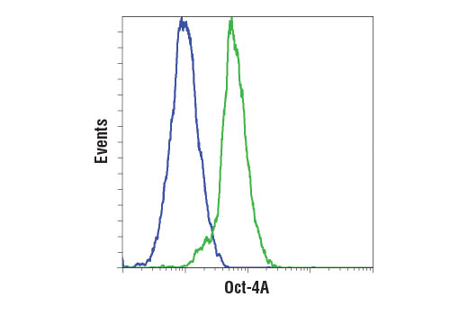 Flow cytometric analysis of NIH/3T3 cells (blue) and F9 cells (green) using Oct-4A (D6C8T) Rabbit mAb (Mouse Specific). Anti-rabbit IgG (H+L), F(ab')<sub>2</sub> Fragment (Alexa Fluor<sup>®</sup> 488 Conjugate) #4412 was used as a secondary antibody.