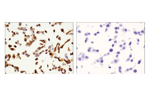 Image 52: Human T Cell Co-inhibitory and Co-stimulatory Receptor IHC Antibody Sampler Kit