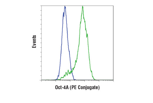 Monoclonal Antibody - Oct-4A (C30A3) Rabbit mAb (PE Conjugate), UniProt ID Q01860, Entrez ID 5460 #56159 - Developmental Biology