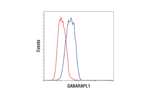 Flow cytometric analysis of HeLa cells using GABARAPL1 (D5R9Y) XP<sup>®</sup> Rabbit mAb (blue) compared to concentration-matched Rabbit (DA1E) mAb IgG XP<sup>®</sup> Isotype Control #3900 (red). Anti-rabbit IgG (H+L), F(ab')<sub>2</sub> Fragment (Alexa Fluor<sup>®</sup> 488 Conjugate) #4412 was used as a secondary antibody.