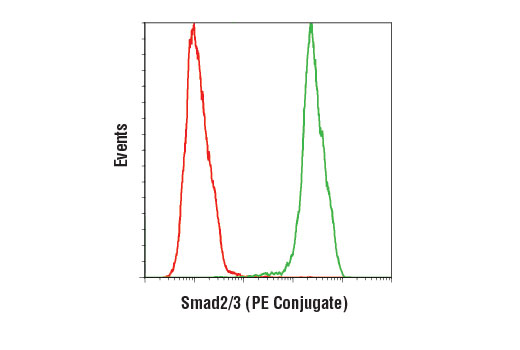 Flow cytometric analysis of HeLa cells using Smad2/3 (D7G7) XP<sup>®</sup> Rabbit mAb (PE Conjugate) (green) compared to Rabbit (DA1E) mAb IgG XP<sup>®</sup> Isotype Control (PE Conjugate) #5742 (red).