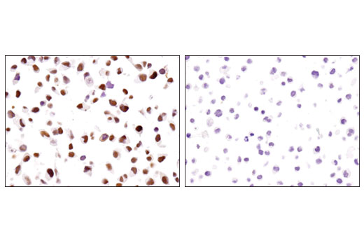 Rat Mesodermal Cell Differentiation