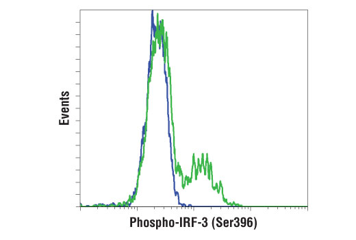 Flow cytometric analysis of HT-29 cells, untransfected (blue) or transfected with Poly (I:C) (2.5 μg/ml, 6 hr; green), using Phospho-IRF-3 (Ser396) (D6O1M) Rabbit mAb. Anti-rabbit IgG (H+L), F(ab')<sub>2</sub> fragment (Alexa Fluor<sup>®</sup> 488 Conjugate) #4412 was used as a secondary antibody.