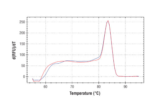 PCR product melting curves were obtained for real-time PCR reactions performed using SimpleChIP<sup>®</sup> Human NFE2L2 Intron 1 Primers. Data is shown for both duplicate PCR reactions using 20 ng of total DNA. The melt curve consists of 80 melt cycles, starting at 55°C with increments of 0.5°C per cycle. Each peak is formed from the degradation of a single PCR product.