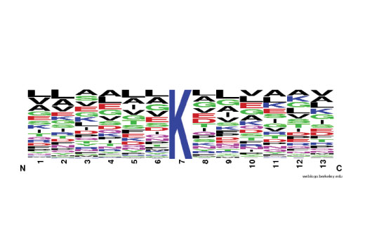 The Motif Logo was generated from a PTMScan<sup>®</sup> LC-MS/MS experiment using 779 nonredundant tryptic mouse liver peptides immunoprecipitated with PTMScan<sup>®</sup> Malonyl-Lysine [Mal-K] Immunoaffinity Beads. The logo represents the relative frequency of amino acids in each position surrounding the central malonylated lysine residue.