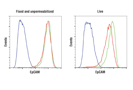 Flow cytometric analysis of fixed and unpermeabilized (left) and live (right) HeLa cells (blue), HT-29 cells (red), and MCF7 cells (green) using EpCAM (D4K8R) XP<sup>®</sup> Rabbit mAb. Anti-rabbit IgG (H+L), F(ab')2 Fragment (Alexa Fluor<sup>®</sup> 488 Conjugate) #4412 was used as a secondary antibody.