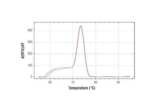 PCR product melting curves were obtained for real-time PCR reactions performed using SimpleChIP<sup>®</sup> Human KLK3 Promoter Primers. Data is shown for both duplicate PCR reactions using 20 ng of total DNA. The melt curve consists of 80 melt cycles, starting at 55°C with increments of 0.5°C per cycle. Each peak is formed from the degradation of a single PCR product.