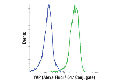 Flow cytometric analysis of RL-7 (blue) and A-204 (green) cells using YAP (D8H1X) XP<sup>®</sup> Rabbit mAb (Alexa Fluor® 647 Conjugate).