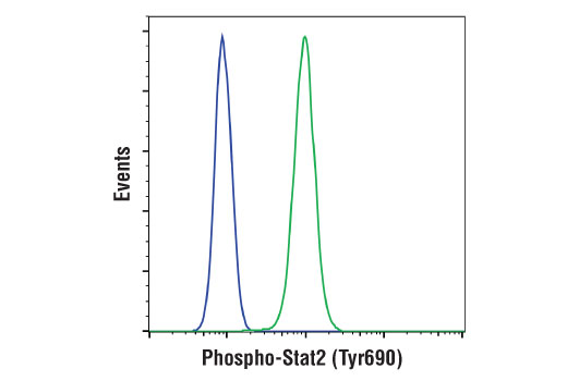 Flow cytometric analysis of U266 cells, untreated (blue) or treated with IFN-α (green) using Phospho-Stat2 (Tyr690) (D3P2P) Rabbit mAb. Anti-rabbit IgG (H+L), F(ab')<sub>2</sub> fragment (Alexa Fluor 488 Conjugate) #4412 was used as a secondary antibody.