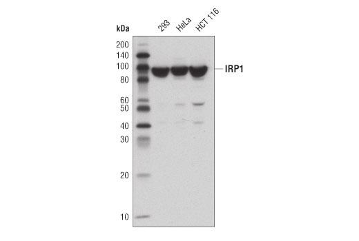Human Aconitate Hydratase Activity