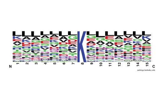 The Motif Logo was generated from a PTMScan<sup>®</sup> LC-MS/MS experiment using 430 nonredundant tryptic peptides derived from mouse liver tissue immunoprecipitated with PTMScan<sup>®</sup> Propionyl-Lysine [Prop-K] Immunoaffinity Beads. The logo represents the relative frequency of amino acids in each position surrounding the central propionylated lysine residue within this data set.