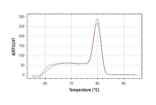 Primer Set - SimpleChIP® Human C/EBPδ Promoter Primers - Chromatin IP, UniProt ID P49716, Entrez ID 1052 #48781, Chromatin Ip