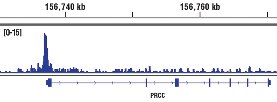 Chromatin immunoprecipitations were performed with cross-linked chromatin from HCT 116 cells and MYST2 (D4N3F) Rabbit mAb, using SimpleChIP<sup>®</sup> Plus Enzymatic Chromatin IP Kit (Magnetic Beads) #9005. DNA Libraries were prepared using SimpleChIP<sup>®</sup> ChIP-seq DNA Library Prep Kit for Illumina<sup>®</sup> #56795. The figure shows binding across PRCC gene. For additional ChIP-seq tracks, please download the product data sheet.