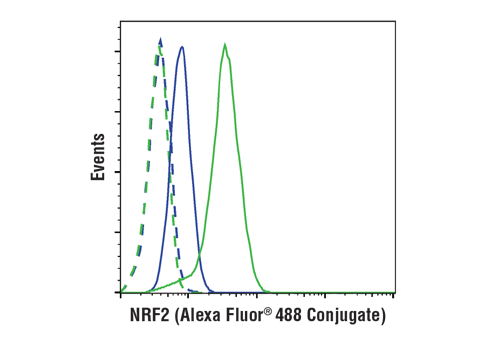 Flow cytometric analysis of MEF wt cells, untreated (blue) or treated with #2194 MG-132 (10 uM, 10 hr; green) using NRF2 (D1Z9C) XP® Rabbit mAb (Alexa Fluor® 488 Conjugate) (solid lines) or concentration-matched Rabbit (DA1E) mAb IgG XP<sup>®</sup> Isotype Control (PE Conjugate) #5742 (dashed lines).