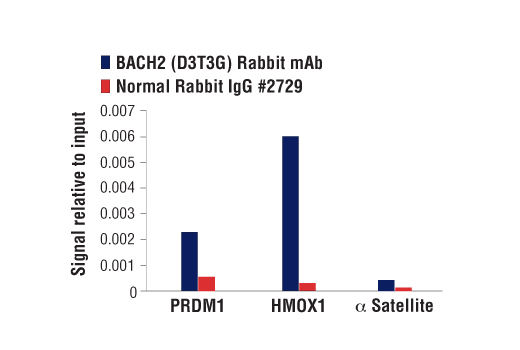 Chromatin Immunoprecipitation Image 1: BACH2 (D3T3G) Rabbit mAb