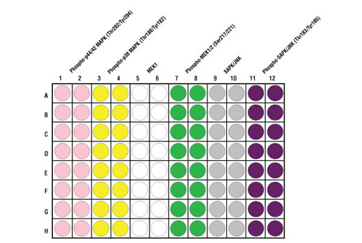 Figure 2. Schematic representation of a 96-well plate depicting the color-code of the reagents used to detect endogenous levels of phospho-p44/42 MAPK (Thr202/Tyr204) (light pink; 1 & 2), Phospho-p38 (Thr180/Tyr182) (yellow; 3 & 4), MEK1 (white; 5 & 6), Phospho-MEK1 (Ser217/221) (green; 7 & 8), SAPK/JNK (gray; 9 & 10) and Phospho-SAPK/JNK (Thr183/Tyr185) (purple; 11 & 12).