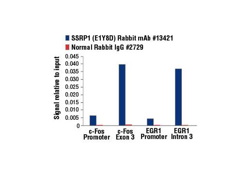 Monoclonal Antibody - SSRP1 (E1Y8D) Rabbit mAb - Chromatin IP, Western Blotting, UniProt ID Q08945, Entrez ID 6749 #13421 - #13421