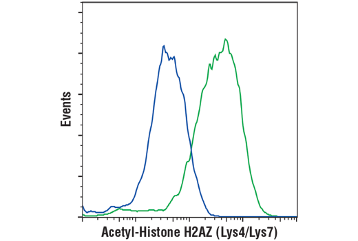 Flow cytometric analysis of HeLa cells, untreated (blue) or treated with Trichostatin A (TSA) #9950 (1uM, Overnight; green) using Acetyl-Histone H2AZ (Lys4/Lys7) (D3V1I) Rabbit mAb. Anti-rabbit IgG (H+L), F(ab')2 Fragment (Alexa Fluor® 488 Conjugate) #4412 was used as a secondary antibody.