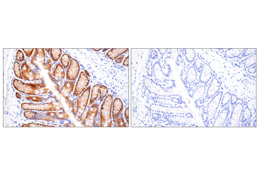 Image 25: Mouse Reactive Inflammasome Antibody Sampler Kit