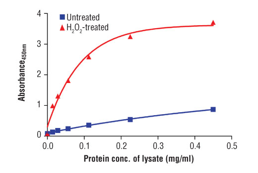 Figure 2: The relationship between protein concentration of lysates from untreated and H<sub>2</sub>O<sub>2</sub>-treated Jurkat cells and the absorbance at 450 nm as detected by the PathScan<sup>®</sup> Phospho-SLP-76 Ser376 Sandwich ELISA Kit is shown. Unstarved Jurkat cells (0.5-1.0 x 10<sup>6</sup> cells/ml) were treated for 3 min with H<sub>2</sub>O<sub>2</sub> (11 mM at 37°C), or left unteated, and then lysed with Cell Lysis Buffer (#9803).