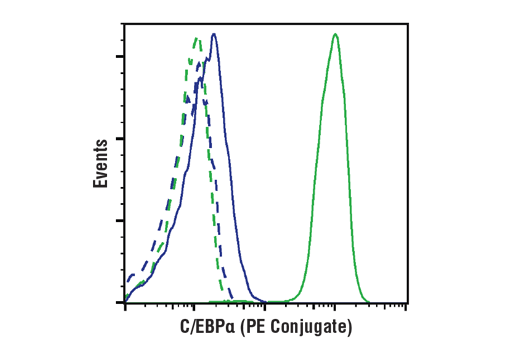 Flow cytometric analysis of Jurkat (blue) and THP-1 (green) cells using C/EBPα (D56F10) XP<sup>®</sup> Rabbit mAb (PE Conjugate) (solid lines) or concentration-matched Rabbit (DA1E) mAb IgG XP<sup>®</sup> Isotype Control (PE Conjugate) #5742 (dashed lines).