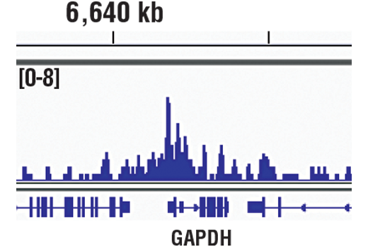 Chromatin IP-seq Image 2