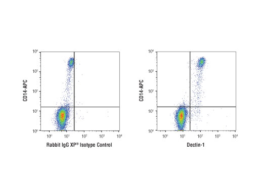 Flow cytometric analysis of human peripheral blood mononuclear cells co-stained with anti-human CD14-APC antibody using Dectin-1 (E1X3Z) Rabbit mAb (right) compared to a concentration-matched Rabbit (DA1E) mAb IgG XP<sup>®</sup> Isotype Control #3900 (left). Anti-rabbit IgG (H+L), F(ab')2 Fragment (Alexa Fluor<sup>®</sup> 488 Conjugate) #4412 was used as a secondary antibody.