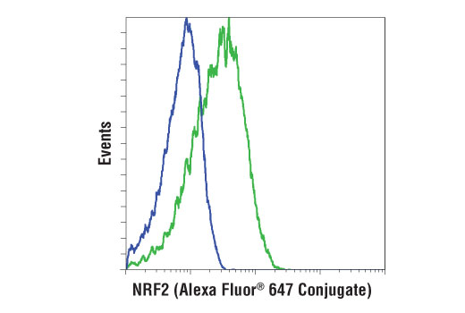Flow cytometric analysis of MEF cells, untreated (blue) or treated with MG-132 #2194 (10 μM, 10 hr; green), using NRF2 (D1Z9C) XP<sup>®</sup> Rabbit mAb (Alexa Fluor<sup>®</sup> 647 Conjugate).