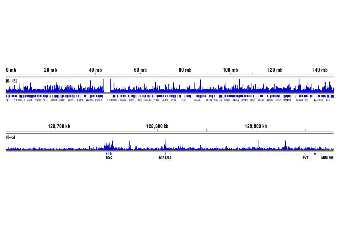 Chromatin Immunoprecipitation Image 2: BRD4 (E2A7X) Rabbit mAb