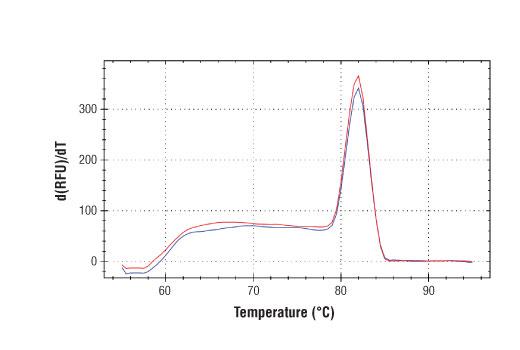 Primer Set - SimpleChIP® Human GLA Promoter Primers - Chromatin IP, UniProt ID P06280, Entrez ID 2717 #27131, Chromatin Ip